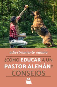 Descubre cómo educar correctamente a un pastor alemán adulto y cachorro de la mano de nuestra adiestradora canina.  #ExpertoAnimal #MundoAnimal #ReinoAnimal #Animales #Naturaleza #Perros #Perritos #Canes #Mascotas #AdiestramientoCanino #PastorAlemán