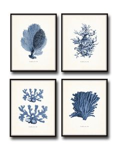 Vintage Indigo Blue Sea Coral Print Set No. 2 - Fine Art Giclee Prints  The text below each image says Coralliens de la Mer which is Corals of the Sea in French.....  This set features 4 sea coral illustrations which have been been digitally enhanced and colored then added to a light neutral background which adds to their vintage charm.  ***Frames are for display purposes and are not included.  SIZES -----------------------------  Available sizes & prices are displayed in the drop down me...