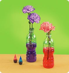 White carnations - 3 for each child (Note: They should be unopened flowers that have not soaked in any water yet)   See-through water bottles   Red, blue and green food coloring   Safety Scissors    wait 30 min and your flowers change color
