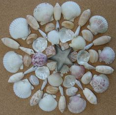 Sanibel Island (Florida) Shells Mandala by Patty Szymkowicz Seashell Art, Seashell Crafts, Seashell Projects, Sea Crafts, Nature Crafts, Shell Decorations, Mandala Artwork, Beach Art, Beach Wood