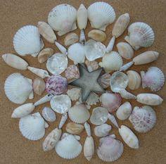 Sanibel Island (Florida) Shells Mandala by Patty Szymkowicz