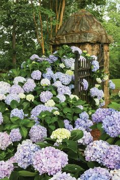 GUIDE to Hydrangeas. Despite Sharing A Name, Not All Hydrangeas Are The Same. Learn How To Use Each Type Successfully.
