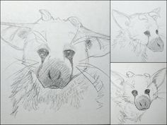 Trico - pencil sketches by IcelectricSpyro.deviantart.com on @DeviantArt