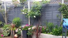 cuprinol silver copse and muted clay Garden Front Of House, Lawn And Garden, Garden Projects, Garden Ideas, Cuprinol Garden Shades, Greek Garden, Dividing Wall, Screening Ideas, Grey Fences