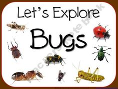 Let's Explore Bugs Bundle