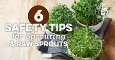 6 Safety Tips for Sprouting & Raw Sprouts