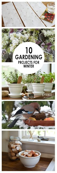 10 DIY Gardening Projects for Winter ~ Bees and Roses Winter Gardening, Winter Gardening Projects, G Diy Gardening, Gardening For Dummies, Container Gardening, Organic Gardening, Beginners Gardening, Diy Garden Projects, Outdoor Projects, Garden Tools, Box Garden
