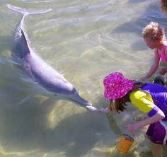 Feed the wild Indo-pacific humpback Dolphins at Tin Can Bay