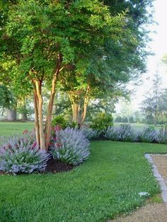 Image result for simple landscaping front yard with crepe myrtle #LandscapingFrontYard #frontyardlandscaping