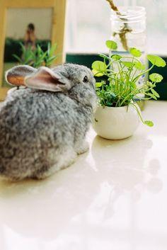 bunny Cute Little Animals, Adorable Animals, Animals Beautiful, Fox And Rabbit, Bunny Rabbit, Funny Bunnies, Baby Bunnies, Dwarf Bunnies, Honey Bunny