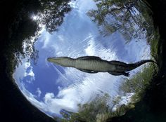 Top Shot: Flying Croc Top Shot features the photo with the most votes from the previous day's Daily Dozen. The Daily Dozen is 12 photos chosen by the Your Shot editors each day from thousands of...