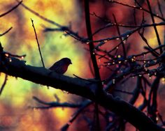 Nature silhouette, rainbow colors, bird photography, nature art, bird on a branch, gothic, colorful wall art, dreamy art, surreal photograph by lmlphoto on Etsy https://www.etsy.com/listing/181111301/nature-silhouette-rainbow-colors-bird