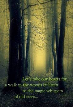 "let us take our hearts for a walk in the woods & listen to the magic whisper of old trees. via ""The Smart Witch"" on fb"