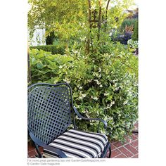 Create a fragrant garden | Here's where to plant your favorite fragrant flowers for the most impact.  jasmine (Trachelospermum jasminoides), container, annual