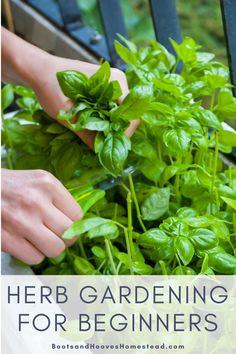 Get the basics of herb gardening for beginners with the basics of starting an herb garden outdoors. Learn the easy steps to create your ultimate herb garden. Vertical Herb Gardens, Small Herb Gardens, Outdoor Gardens, Veggie Gardens, Hydroponic Gardening, Herb Gardening, Organic Gardening, Herbs Garden, Indoor Gardening