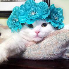 sophielovestuna:  Who needs a little flower girl?