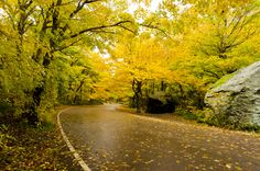 beautiful fall shot - leaves by  Sandeep Thomas (photo and copyright).