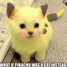 Pokemon in the real world. Pikachu cat :D Cute Kittens, Baby Kittens, Cats And Kittens, Funny Kitties, Kitty Cats, I Love Cats, Crazy Cats, Pikachu Cat, Cat Pokemon