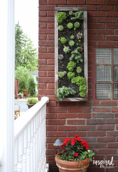 DIY Vertical Hens and Chicks Planter - fun project for outdoor planting. Wonder if you could arrange succulents/plants enough to write out your house number & place it next to the front door.