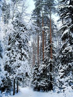Winter Magic, Winter Snow, Winter Time, Winter Christmas, Winter Season, Wild Forest, Winter Scenery, Christmas Scenes, Winter Pictures