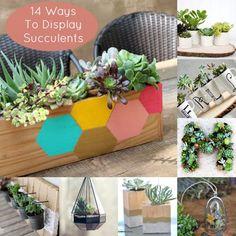 14 Ways to Display Succulents