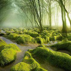 De wereld barst van prachtige plekjes. En zelfs als je geen natuurfreak bent zal je de magische plaatsen die moeder natuur ons schenkt wel weten te waarderen. In deze 8 wondermooie bossen willen wij alvast wel eens verloren lopen!   newsmonkey
