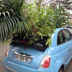 a green 500
