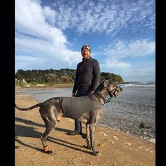 After a long recovery, Huckleberry is feeling good again! http://tripawds.com/forums/size-and-age-matters/huckleberry-the-great-dane/page-2/#p147543 #Tripawd #GreatDane http://i247.photobucket.com/albums/gg152/besterfield/Mobile%20Uploads/0BC1A732-7410-4A49-B9B0-21BC2AD6414D.jpg