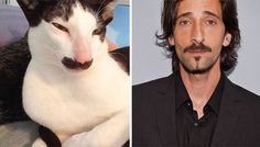 Stache The Cat Looks Like Adrien Brody