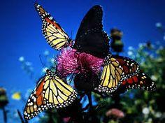 Resultado de imagen de colourful butterflies
