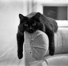 Looks EXACTLY like my cat Sidney!