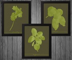 Oregano Parsley and Basil 3 Print Pack Kitchen Decor Gift Idea Present Herbs Ingredients Chef - pinned by pin4etsy.com