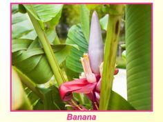 Você conhece a flor desta fruta?