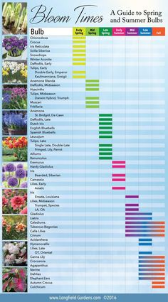 A bloom time chart shown to show you when each type of bulb is at its peak in the spring and summer. Helpful garden advice!
