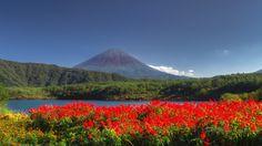 """""""Red Fuji"""" during autumn, near lake Saiko. www.phoclab.com"""