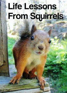 What Squirrels Can Teach Us About Being Human like NOT voting for Crackpot tRump!!  :)
