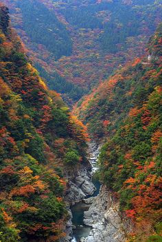 Autumn colours in Iya Valley, Tokushima, Japan (by Tomobil).