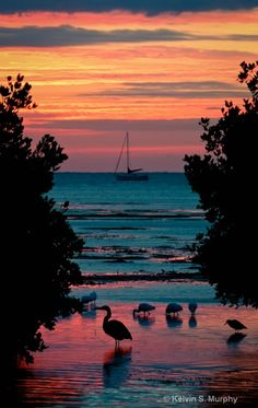 Sunrise - Key West, Florida I've never been to Florida but I would avoid Orlando, shun all the glitz of Miami and head right to The Keys.  See one of Hemingway's polydactyl cats.  Sip margaritas as I watch the sun set.  Aaaahhhh.