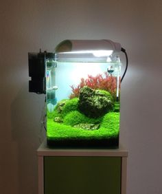 Favourites: nano tank by Volker Jochum Only 6 weeks old set up. Nice carpet and super bright red rotala! There must be a powerful bulb on the lighting