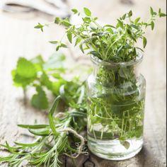 Conselhos para ter seu próprio jardim de ervas