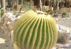 """Jardín Botánico """"Helia Bravo Hollis"""", Zapotitlán Salinas, Pue."""