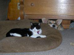 20случаев, когда собаки оказались совершенно беззащитны перед котами