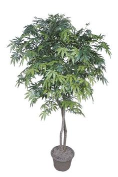 Small trees that are good for planting in a large flower pot.