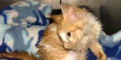 Prosecute Savoy Man Guilty of Animal Cruelty of More Than 30 Cats. Please sign