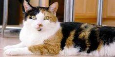 Tips cara menggemukkan kucing dengan cepat. Info makanan agar tubuh kucing bisa gemuk dan sehat dengan mudah http://www.kucinglovers.com/cara-menggemukkan-kucing/  #kucing #kucinglovers #pecintakucing #hewanpeliharaan #binatangpeliharaan #cat #catlovers #animal #kucinggemuk #menggemukkankucing
