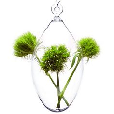 CLEAR GLASS HANGING EGG VASE from JazzItUpInteriors.co.uk