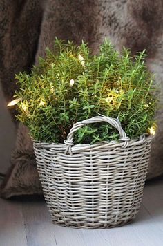 Garden Lights - fill a basket with branches or use pot of rosemary and add lights via Belgian Pearls Christmas Design, Rustic Christmas, Winter Christmas, Christmas Holidays, Christmas Decorations, Holiday Decor, Xmas, Christmas Lights, Christmas Greenery