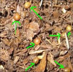 Earth Worm Habitat Early April '16 | Chooks and Pigs