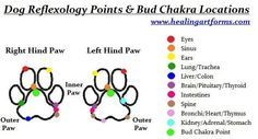 is a dog reflexology point and chakra chart, i wonder if it is the same for cats toothis is a dog reflexology point and chakra chart, i wonder if it is the same for cats too Young Living Essential Oils: Vita Flex Points for Dogs: . Essential Oil Chart, Essential Oils Dogs, Reflexology Points, Foot Reflexology, Acupressure Points, Young Living Oils, Young Living Essential Oils, Essential Oils For Fibromyalgia, Yoga