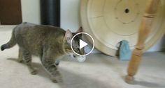 Dono Cria Invulgar Dispensador De Comida Para o Seu Gato http://www.funco.biz/dono-cria-invulgar-dispensador-comida-seu-gato/